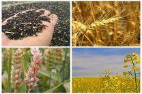 سهم ایران از بازار گیاهان دارویی 1 درصد است