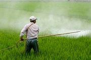 بازدید مستمر کارشناسان حفظ نباتات از مزارع، باغات و گلخانه ها جهت کنترل آفات و بیماری ها
