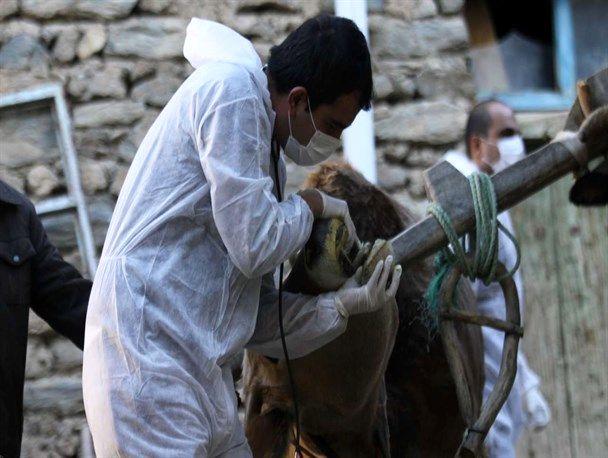 تاکنون  بیماریهای مشترک دام و انسان در استان گیلان مشاهده نشده است