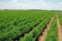 برنامه میان مدت راهبردی تهیه و تدارک انواع بذور توسط جهاد کشاورزی