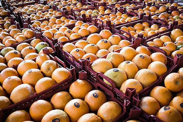 سهمیه پرتقال آذربایجان غربی برای بازار عید 3 هزار تن تعیین شد