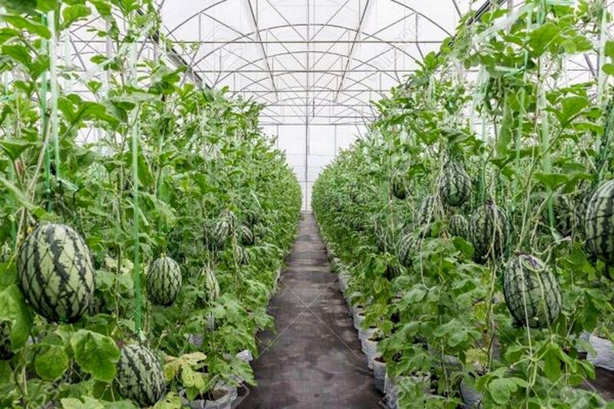 کشت گلخانه ای، صنعتی پر سود با حداقل مصرف آب در خراسان رضوی