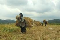 اگر وضعیت کشاورزان مشخص نشود سوال یا استیضاح وزیر کشاورزی در دستور کار قرار می گیرد