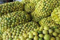 کشف 3 تن لیموی قاچاق در نائین