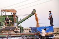 تولید یک میلیون و ۳۸۰ هزار تن گندم در استان گلستان