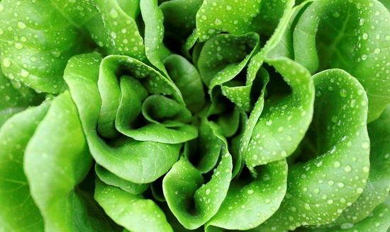 مصرف سبزیجات برگدار خطر ابتلا به زوال عقلی را کاهش میدهد