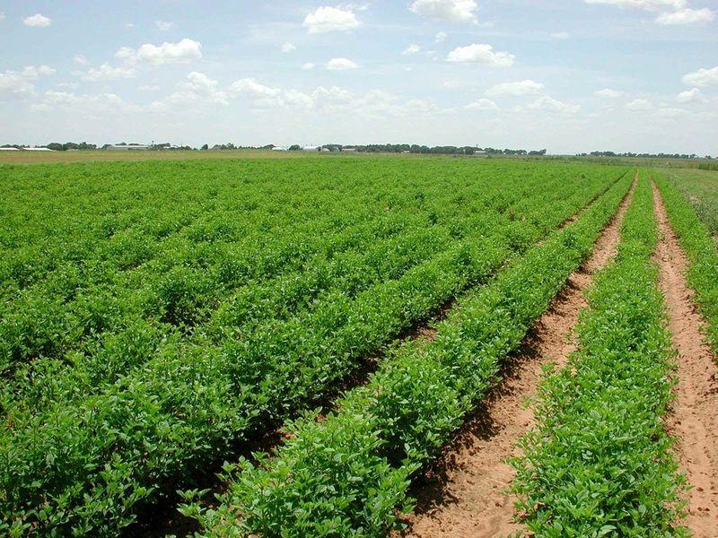۳۵ درصد محصولات کشاورزی کشور آلودگی شیمیایی دارند