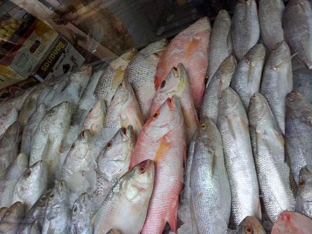 صید ماهی شوریده در آبهای خوزستان و بوشهر ممنوع شد