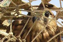 دستگیری 2 شکارچی متخلف در بندرلنگه