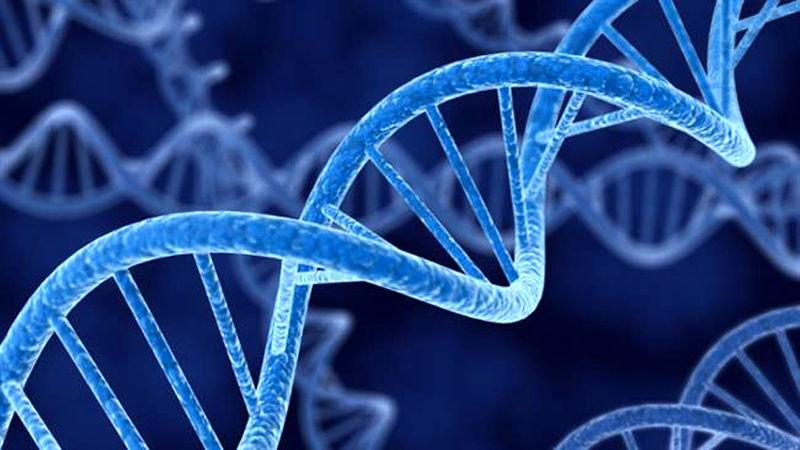 ذخایر میکرو ارگانیسمی مرکز ملی ذخایر ژنتیکی و زیستی در مرز 4000 گونه
