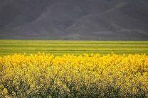 مشکل کمبود بذر کشاورزان در استان گلستان برطرف میشود