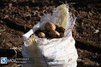 رتبه نخست همدان در تولید سیر، گردو و سیب زمینی