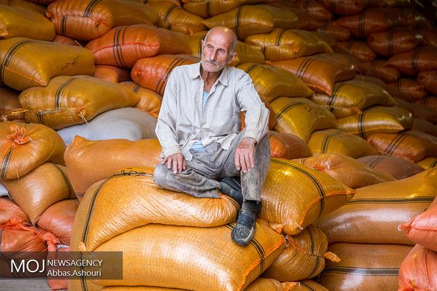 یک بام دو هوا؛این بار در وزارت جهاد کشاورزی/ واردات برنج در زمان ممنوعیت