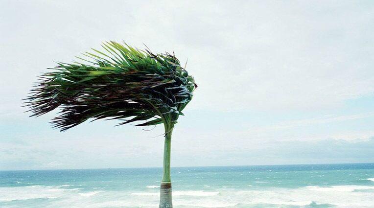 وزش بادهای شمال غربی بر خلیج فارس