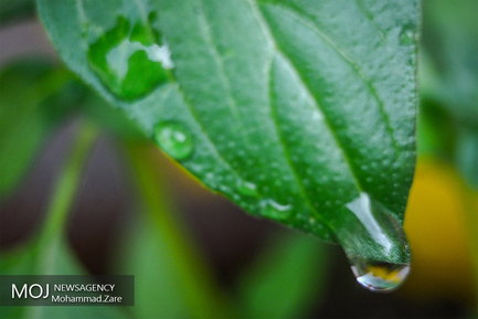 قطرات آب سوژه های زیبایی