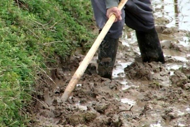 32 درصد اراضی شالیزاری گیلان شخم زمستانه خورد