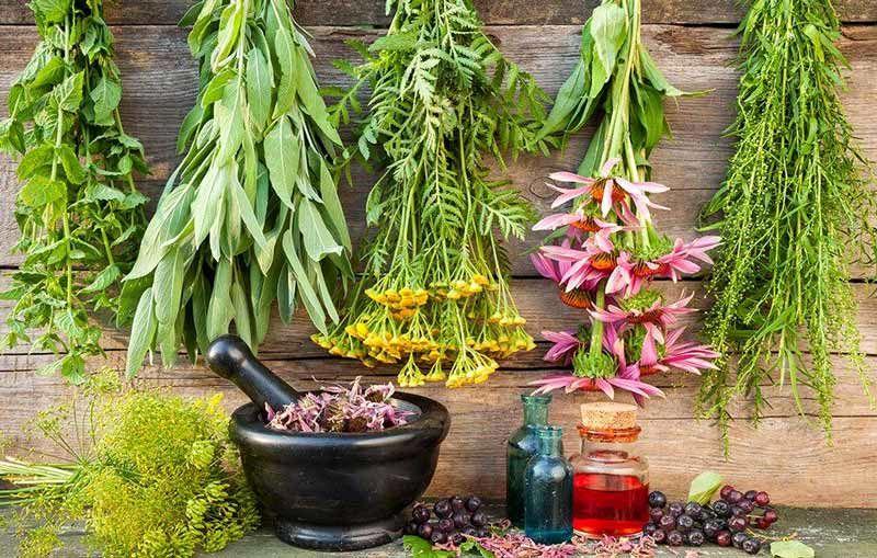 کشت گیاهان دارویی در برنامه ششم توسعه می یابد
