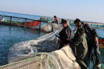 رهاسازی بیش از 280میلیون قطعه بچه ماهی برای بازسازی ذخایر آبزیان دریای مازندران