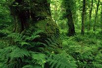 جنگل هیرکانی مازندران بزودی در سازمان یونسکو ثبت جهانی می شود