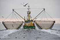 ۳۴ فروند شناور غیرمجاز صید ترال در هرمزگان توقیف شد
