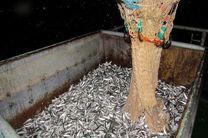 افزایش درآمد صیادان ماهی کیلکا در مازندران