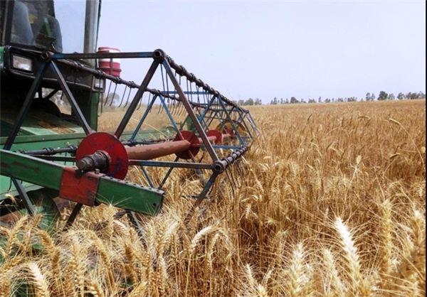 آغاز برداشت گندم از 31 هکتار از اراضی کشاورزی سرپل ذهاب