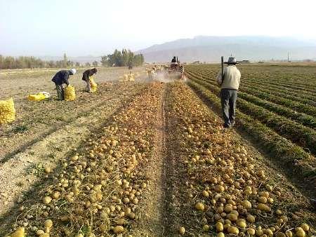 کشاورزان تویسرکان و کبودرآهنگ در کشور نمونه شدند