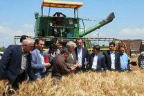 پیش بینی افزایش 20 درصدی تولید گندم در مازندران