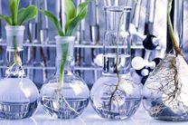 نامه ۳۰۶ عضو هیأت علمی به ابتکار درباره محصولات تراریخته