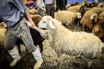 فروش کنجاله سویا با قیمت بالاتر از 2300 تخلف است/قاچاق دام زنده در کشور محدود است