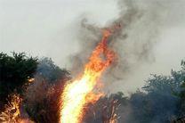 آتش سوزی در این باغ رخ نداده است