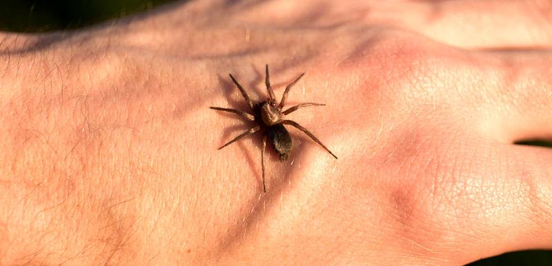 راهکار درمان گزیدگی حشرات در سفرهای نوروزی