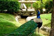 بازگشایی باغ پرندگان بندرعباس بعد از یک سال تعطیلی