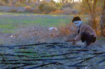 سمینار مدیریت بهینه منابع آبی با رویکرد آب مجازی در یزد برگزار شد