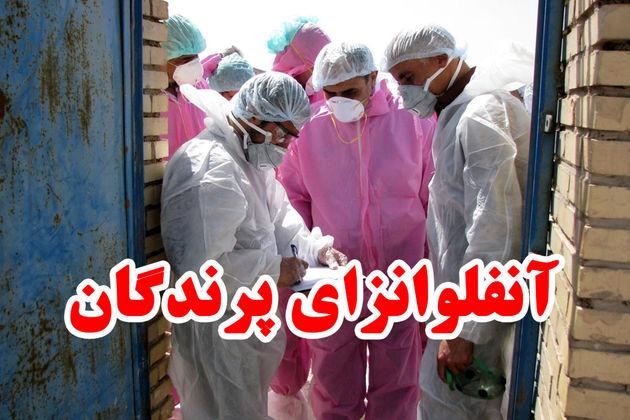 جلسه ستاد کنترل و پیشگیری از آنفلوآنزای فوق حاد پرندگان در گلپایگان برگزار شد
