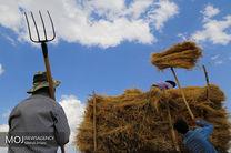 عملیات برداشت گندم از مزارع شهرستان دلفان آغاز شد