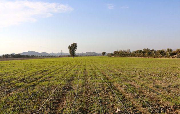 کشاورزی حفاظتی در سطح یک میلیون و ۷۰۰ هزار هکتار از اراضی کشور اجرا شده است