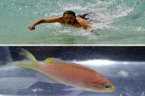 این ماهی «اوباما» نام دارد