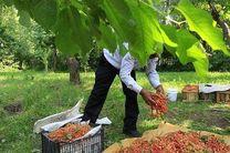 محصولات کشاورزی هنوز تشکل صادراتی ندارند