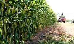 توزیع 17 هزار تن نهادههای دامی در بین کشاورزان هرمزگان