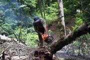 مخالفت مجلس با قطع درختان جنگلی بمنظور فعالیت های عمرانی