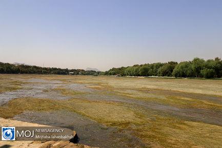 مرگ آبزیان در اثر خشک شدن زاینده رود