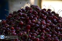 برآورد ۵۰۰ میلیارد تومانی فروش گیلاس در مازندران