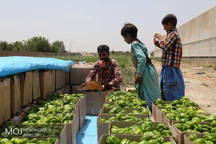 درآمدهای داغ - کشاورزی