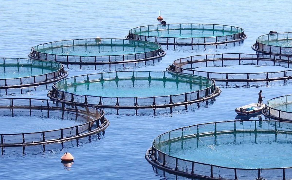 آغاز نصب قفس های پرورش ماهیان دریایی با ظرفیت ۵۰۰ تن در بندر چیروئیه