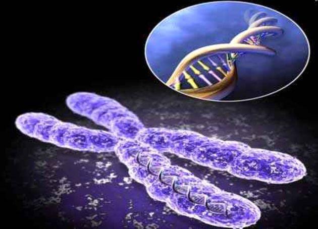 بررسی درمان بیماری های خونی با سلولهای بنیادی
