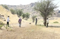 ارتش ملخهای مهاجم به روستای گزیر در بندرلنگه رسید