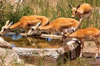 ممنوعیت ورود گردشگران به پناهگاههای حیات وحش دراصفهان