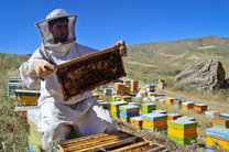 اشتغال بیش از 5 هزار زنبوردار در استان کردستان