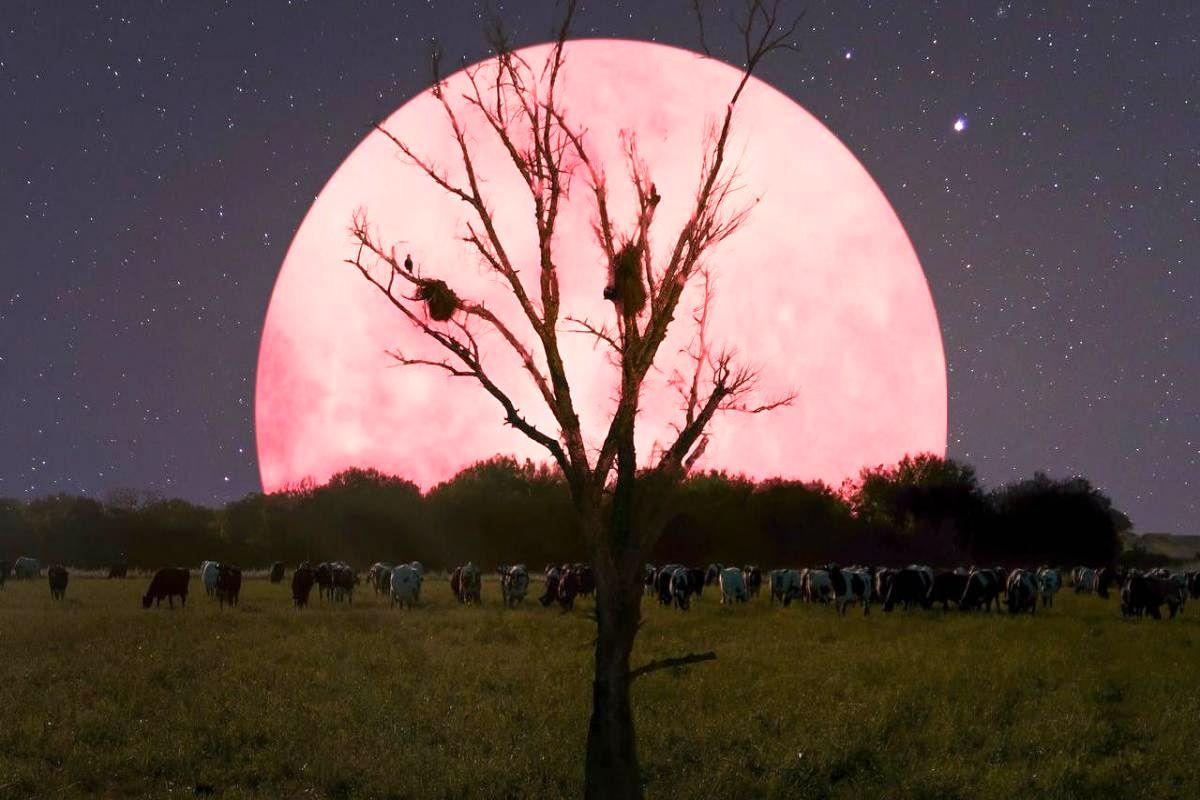 شاید امشب دراکولا از خواب بیدار شود! / آیا پدیده اَبَر ماه، زندگی انسان ها را تحت تاثیر قرارمی دهد؟!